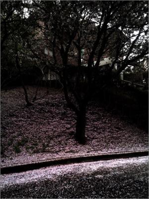 20140419-2014-04-19-09.07.52.jpg